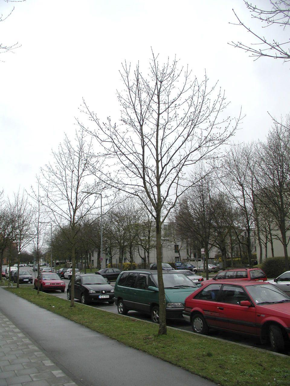 München 2004